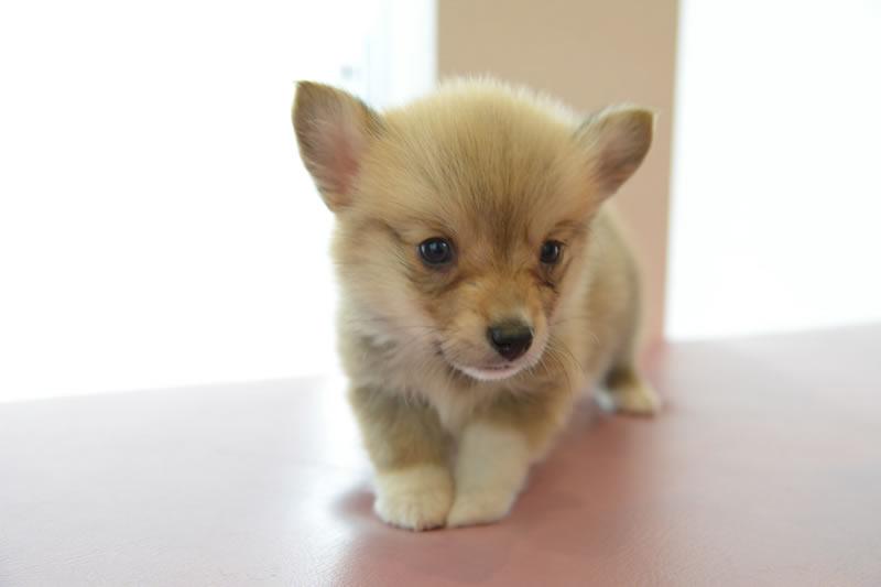 埼玉県入間郡越生のきくた動物病院の犬販売