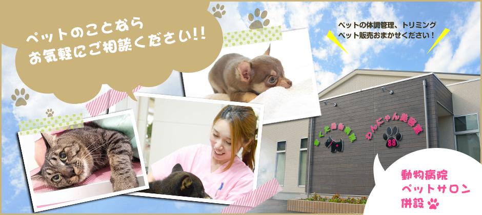 犬・猫などペットの体調管理やトリミング、ペット販売は埼玉県入間郡のきくた動物病院・わんにゃん美容室88
